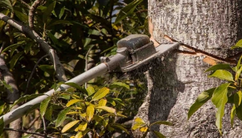 10 Best Gas Pole Saws- 2020 Review And Buyer Guide