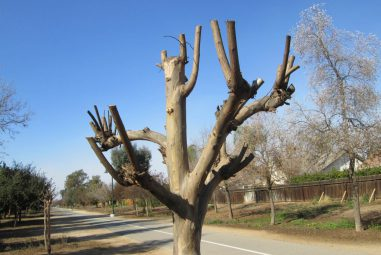 Tools suitable for pruning