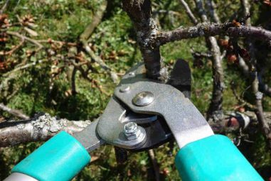 When To Prune Shrubs And Trees- Full Year Guide 2020
